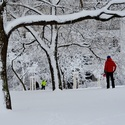Zima v městském parku