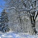 Zimní cestou