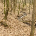 Březen v lese