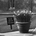 Oxfordské jaro