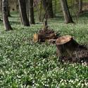 Poslové jara