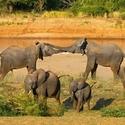 vzpomínky na Afriku (5)