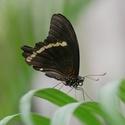 Motýlí elegance