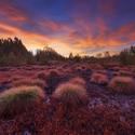 Podzimní Soumarská rašeliniště