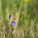 Poslední kvetoucí v uschlé trávě
