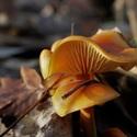 prosincové houbaření...:-)
