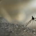 Jako pavouk