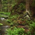 V bludišti skal a lesů