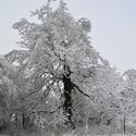 Zamrzlý strom