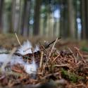 Možná jediná věc v lese, která připomíná zimu