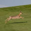 Návštěvník na golfu