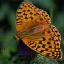 Léto plné motýlů