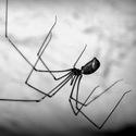 Pavoučí retro