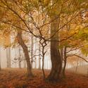 Podzimní bytosti