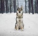 Wolfdog <3