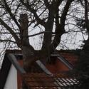 Nevídaná ohleduplnost ke stromům