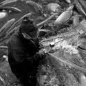 ryby rybky rybičky