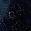 Pavučina po ránu