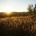 Ta Jižní Morava je jistě krásná zem...