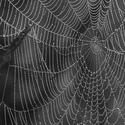 Prozrazená pavučina