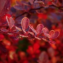 červený podzim