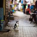 Kočka v uličce