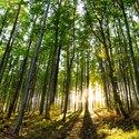 Západ slunce v lesích