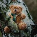 Tonda Medvěd