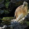 Ptačí mokřad