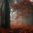 ...podzimní les