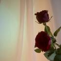 Den s růží