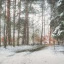 Zima v parku III