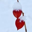 Červená a bílá...
