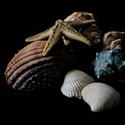 Schránky mrtvých korýšů