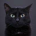 kočičí modelka