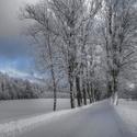 Zimní alejí