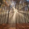 V podzimním bukovém lese ...