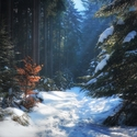 Cesta sněhem