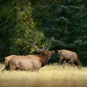 obrázky z přírody Severní Ameriky (5)
