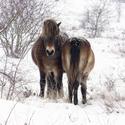 On/off divokých koní