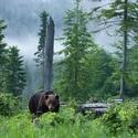 V kráľovstve medveďov