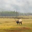 obrázky z přírody Severní Ameriky (19)