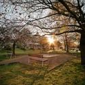 Jaro v městském parku ...