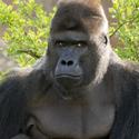 Richard ze Zoo Praha