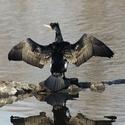 Suším křídla