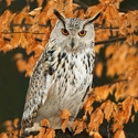 oči v barvě podzimu