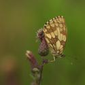 Motýlí relax
