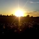 Západ slunce nad polem