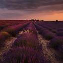 Letní Provence