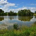 Na břehu rybníka